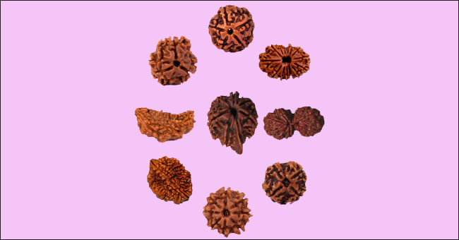 know about all types of rudraksha