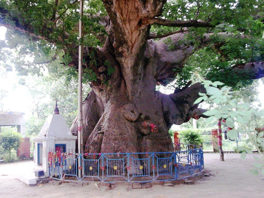 The only tree of world parijat is in india