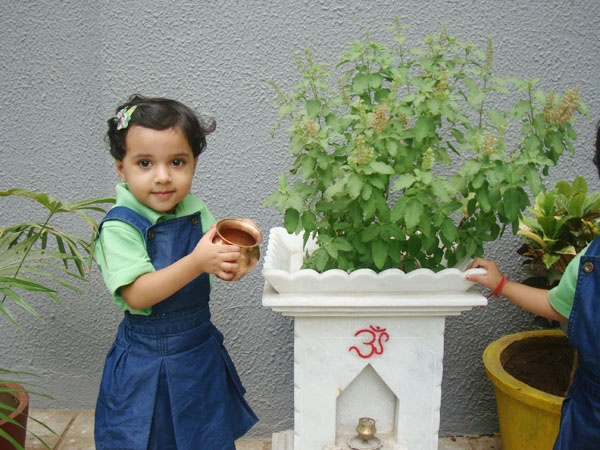 why tulsi being treated as goddess tree