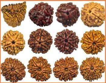 Rudraksha Shiva originated from what was Asuo?