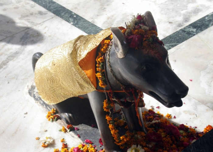 Dogs are worshiped in this temple
