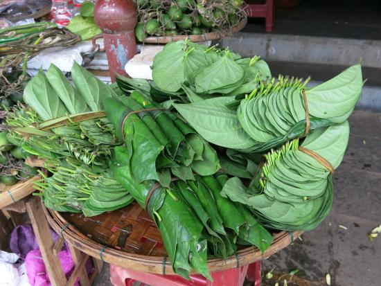 Betel may made you poors