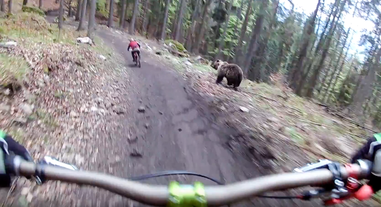 Bear attack on byke racers on mountains!